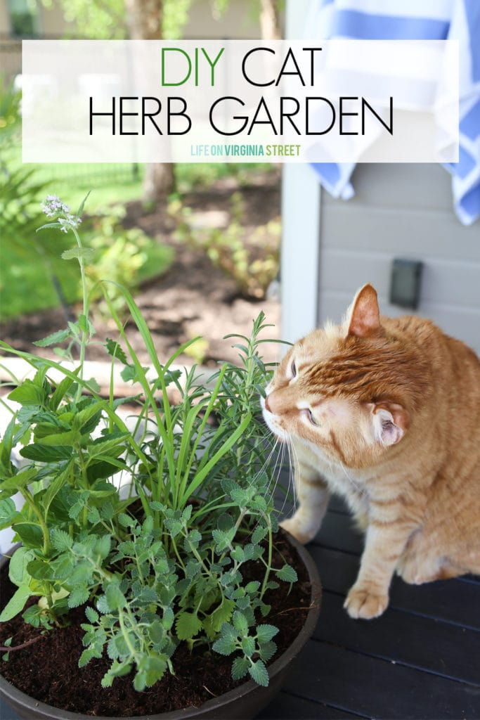 DIY cat herb garden graphic.