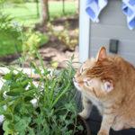 DIY Cat Herb Garden
