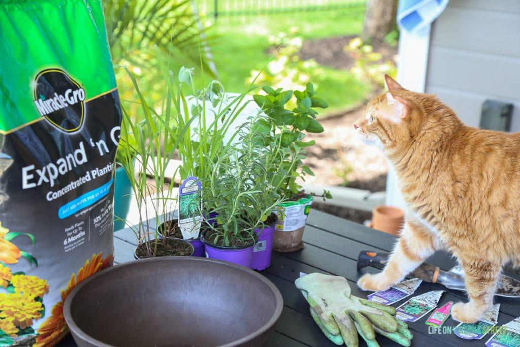 DIY Cat Herb Garden Prep