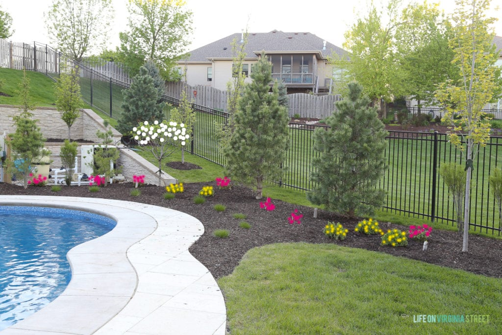 A backyard with an unground pool and flowers around it.