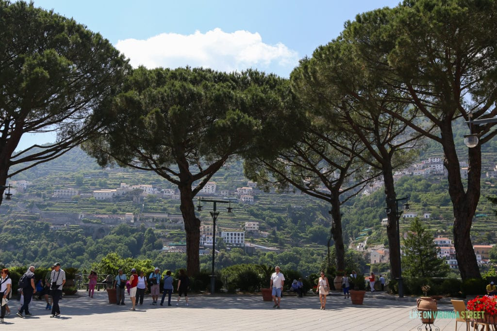 Large trees in the town of Ravello.