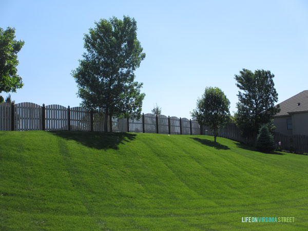 Here is a before photo of our yard, before we put in the pool. You can see our back fence line and the tall trees in the far edge of our lawn.