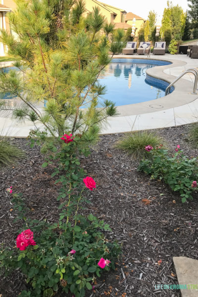 Fall Yard and Rose Maintenance Tips & A Giveaway!