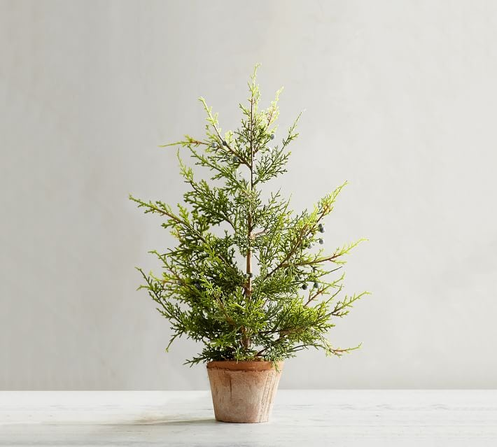 This adorable juniper tree is the perfect addition to your home.