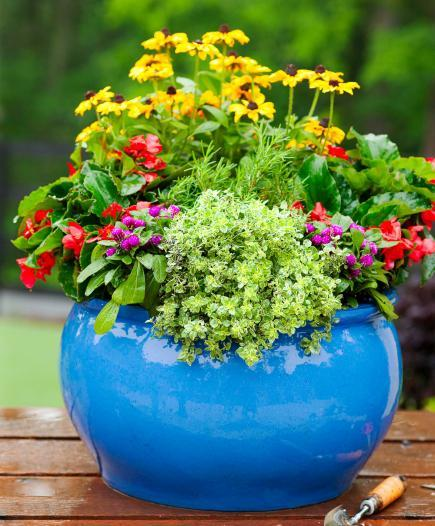 A small bright blue pot filled with red and purple flowers.