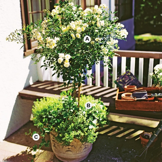 Mother S Day Container Garden Ideas: Life On Virginia Street