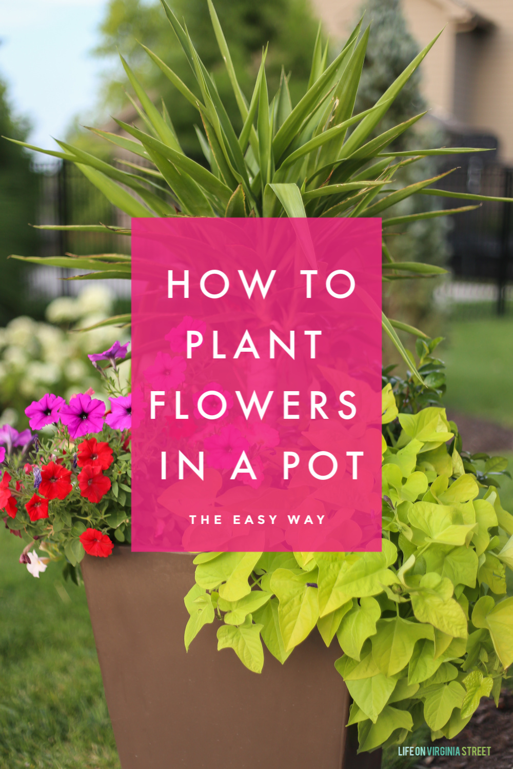 Tutorial How To Plant Flowers In A Pot Life On Virginia Street
