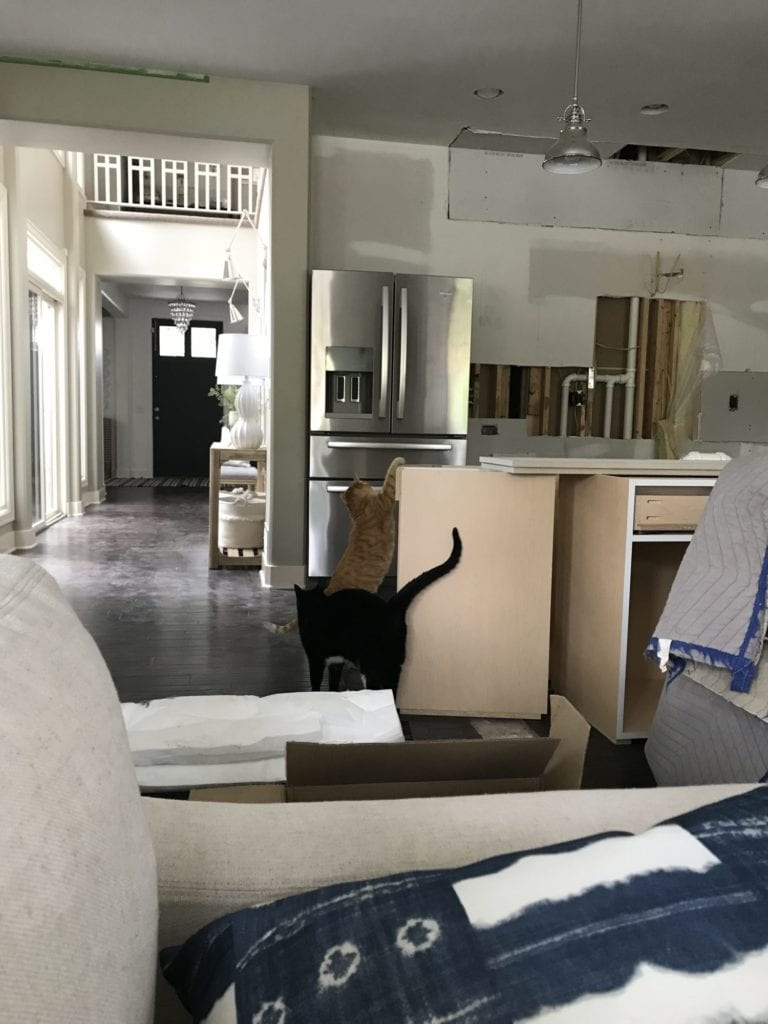 Two cats playing in the kitchen that is being renovated.