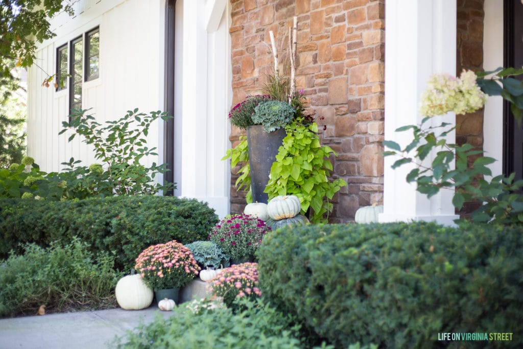 Large planter beside front door filled with kale and a bright green vine trailing down.