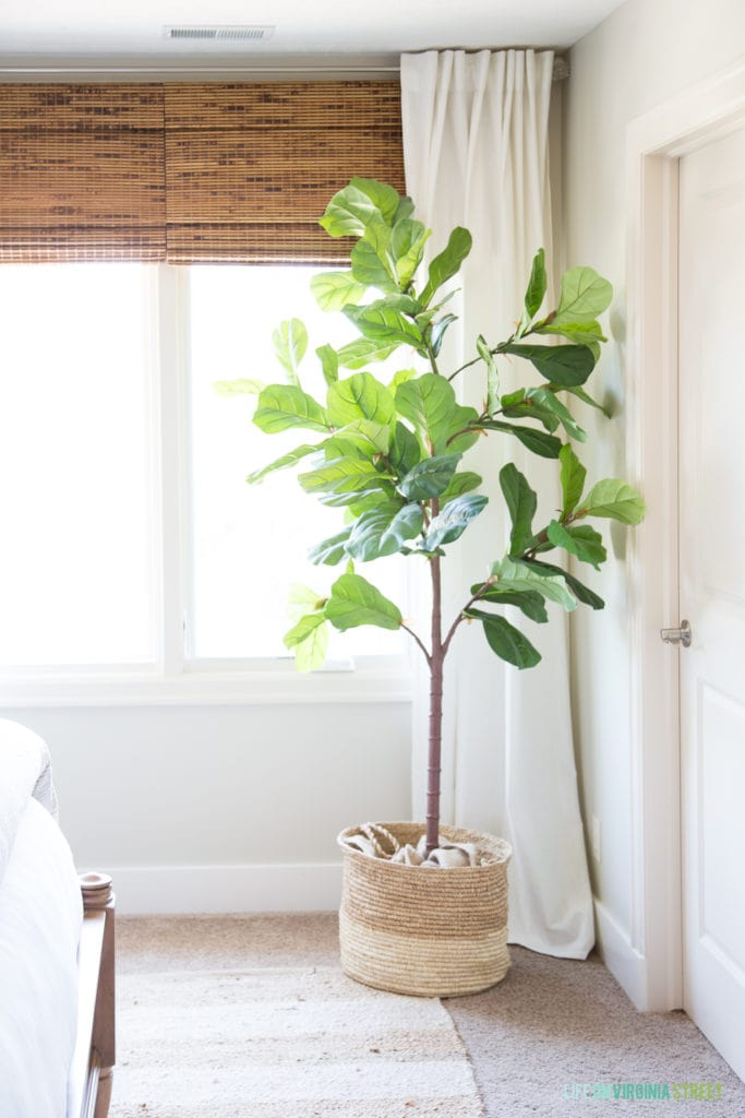 A faux fig leaf plant is beside the window.