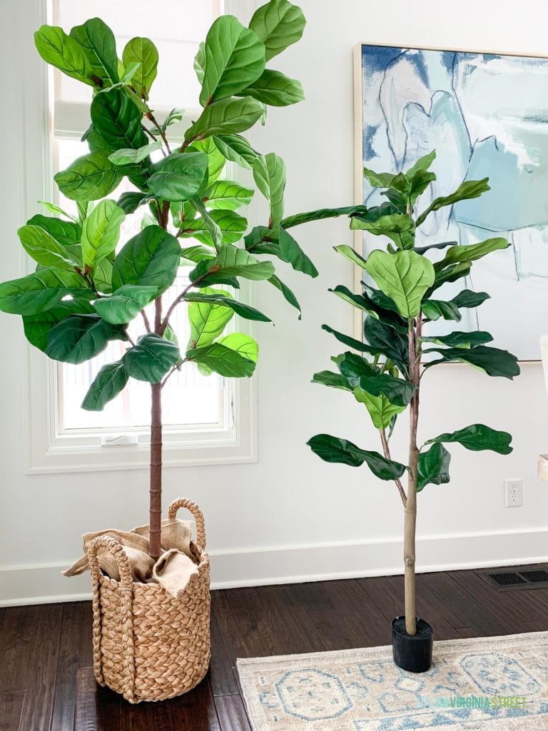 The 7' faux fiddle leaf fig tree from Pottery Barn compared to the budget-friendly version from QVC.