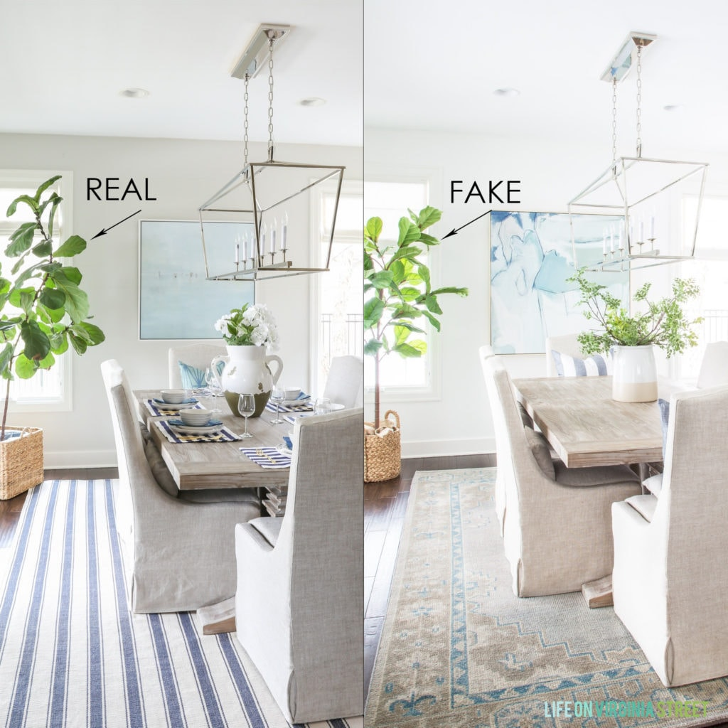 A real fiddle leaf fig tree versus a faux fiddle leaf fig tree both shown in the same dining room.