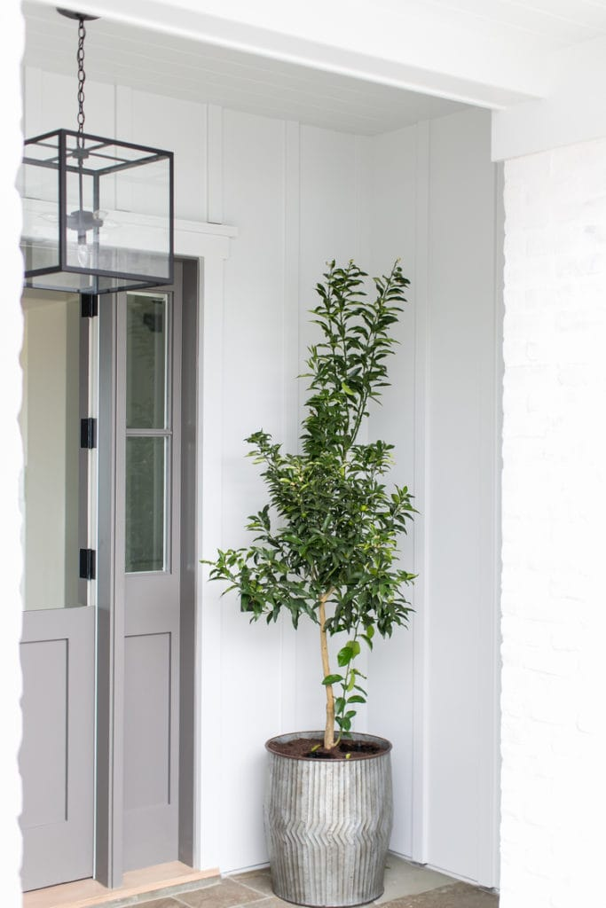 A simple small tree in a galvanized planter on a front porch with a grey door.