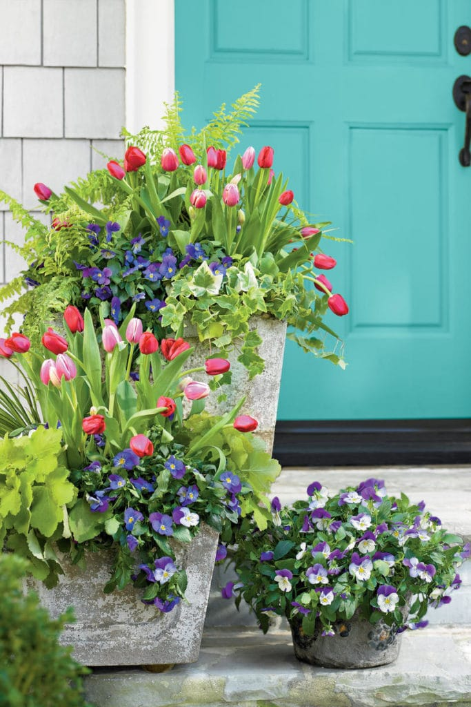 A beautiful spring front porch with gray shaker shingles, a turquoise front door and planters filled with tulips, ferns, pansies and ivy.