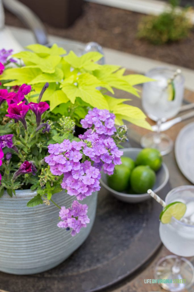 The large potted plant in the middle of the table with a bowl full of fresh limes beside it.