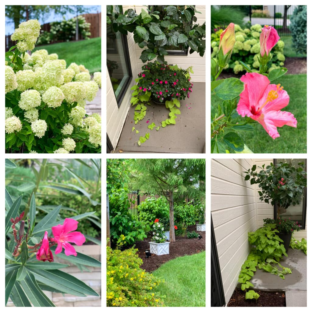 A variety of flowers from around our home including limelight hydrangeas, hibiscus, oleander, mandevilla, sweet potato vines, impatiens and more!